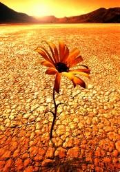 Sunbaked Mud in Desert